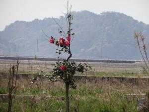 被災地復興支援 東松島